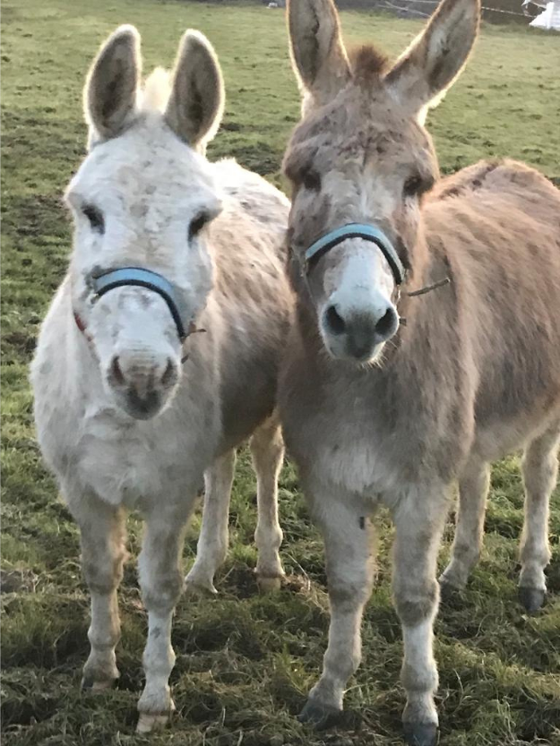 donkeys at Marlhill Open Farm Tipperary