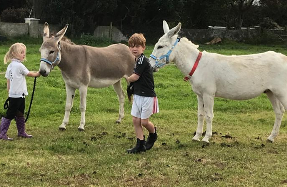 Animals at Marlhill Open Farm